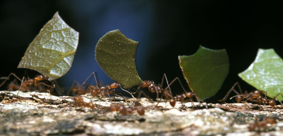 A la découverte des fourmis, des insectes ingénieux et très intelligents ! 14076227