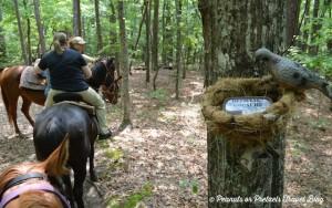 Amusez-vous et partez à la recherche des GeoCache Geocaching-on-Horseback-300x188