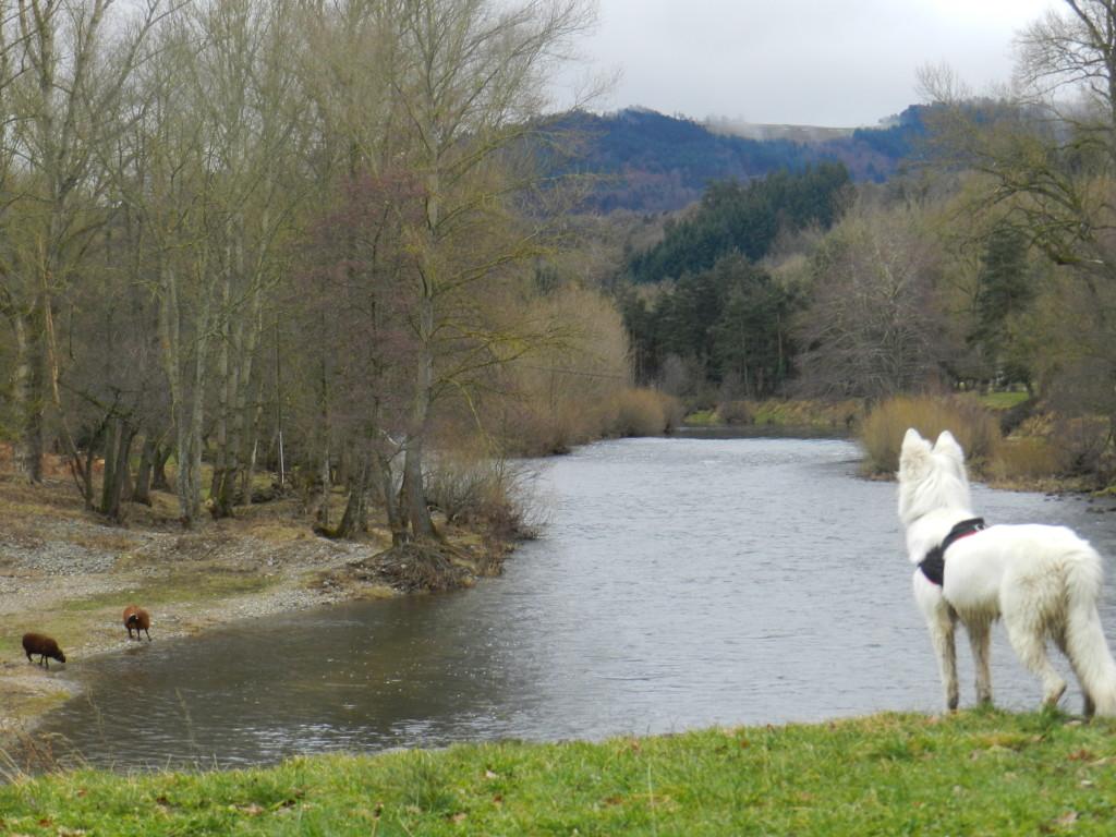 Le Berger Blanc Suisse est-il Suisse ? Vacances-Hiver-Jahon_9-1024x768