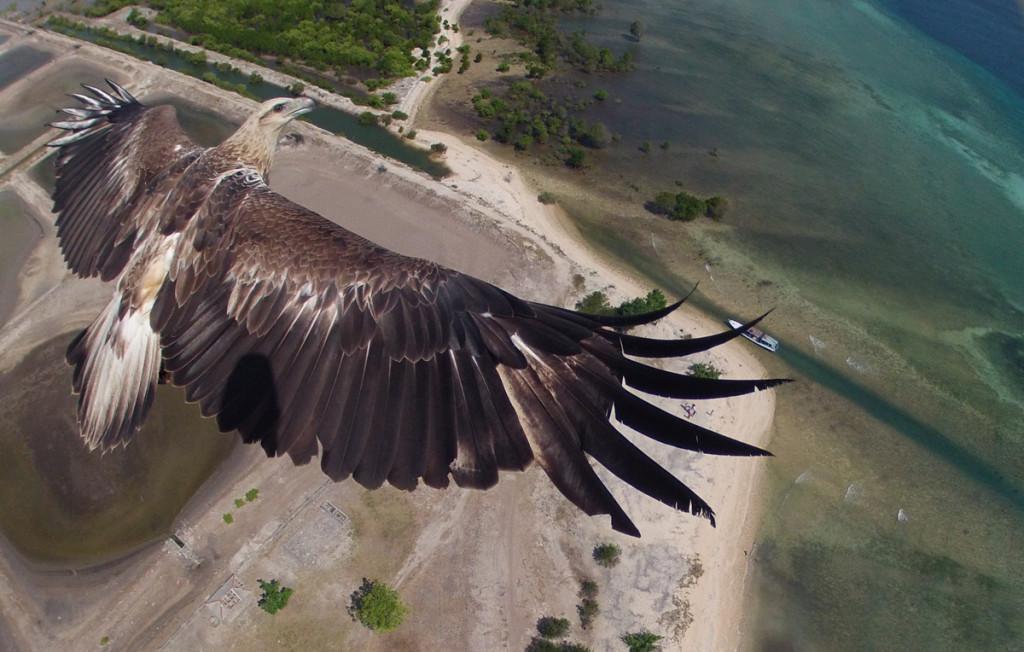 Les 10 plus belles photos de 2015 prises à l'aide d'un drone aigle-dronestagram-1024x652