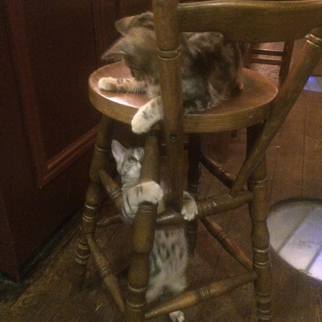 Les chats sont les rois dans ce pub en Angleterre bar-a-chat-3