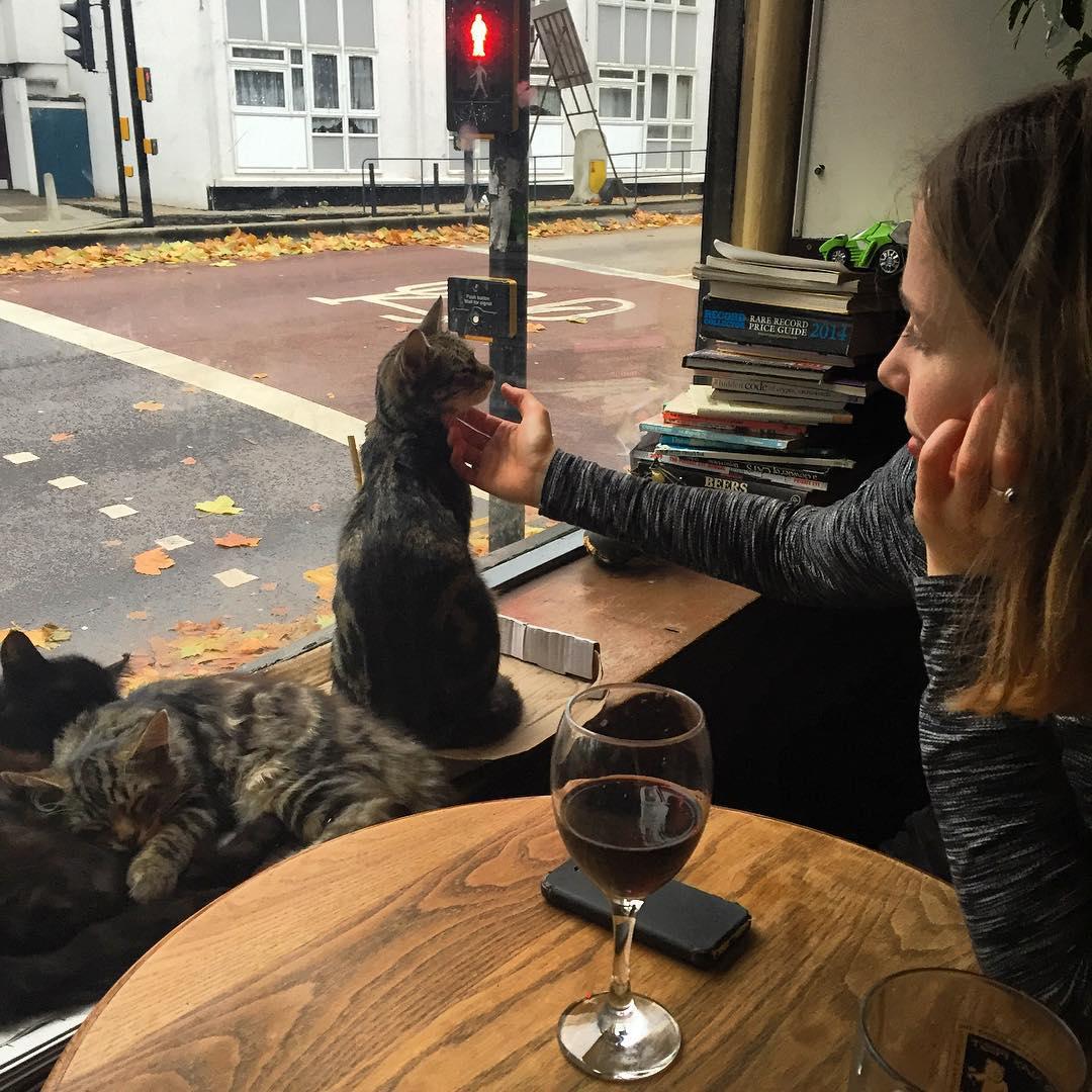 Les chats sont les rois dans ce pub en Angleterre bar-a-chat-4