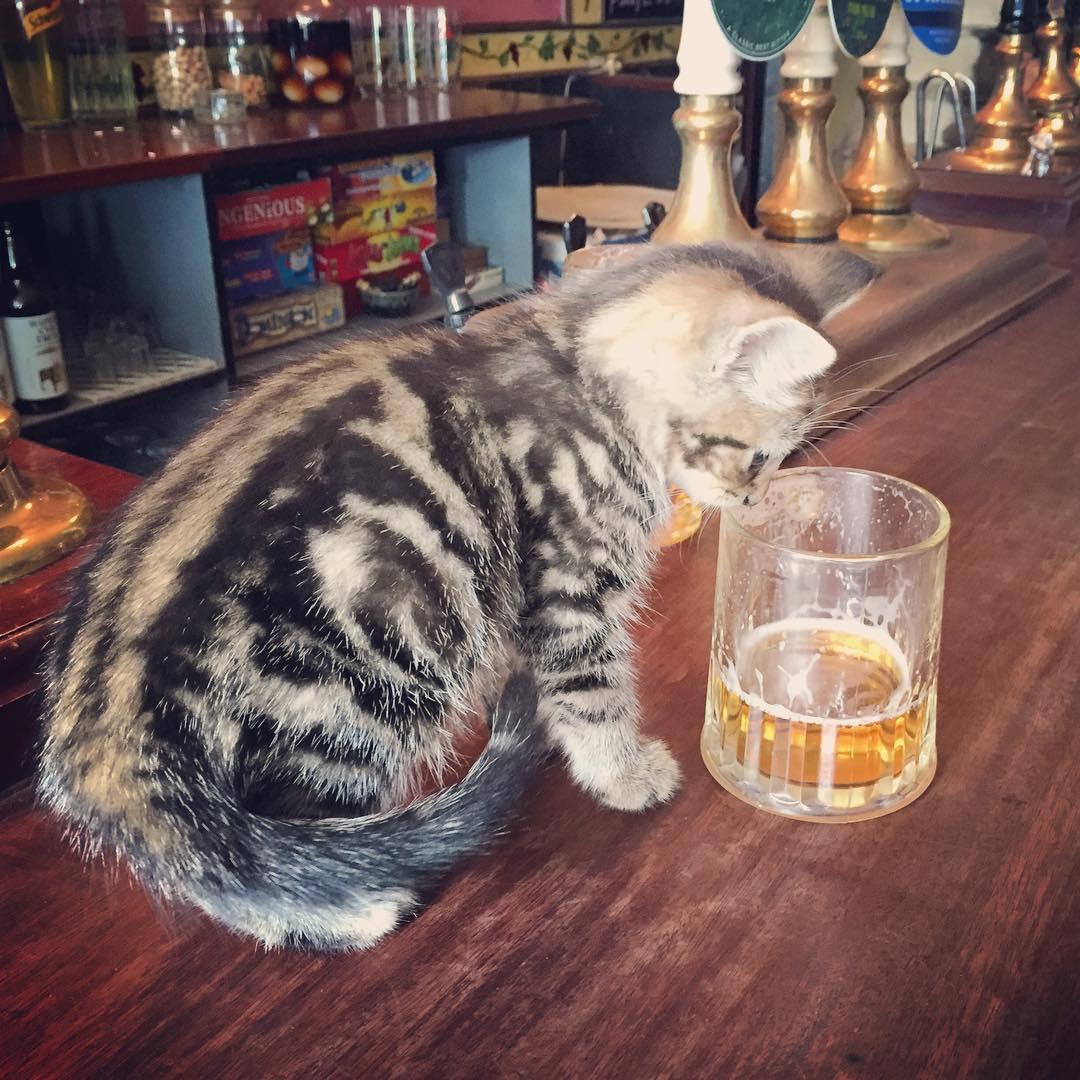 Les chats sont les rois dans ce pub en Angleterre bar-a-chat-6