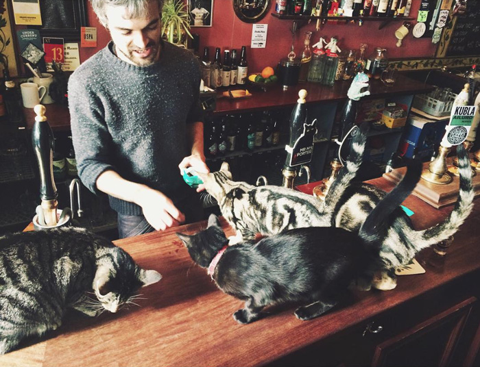 Les chats sont les rois dans ce pub en Angleterre bar-a-chat-7