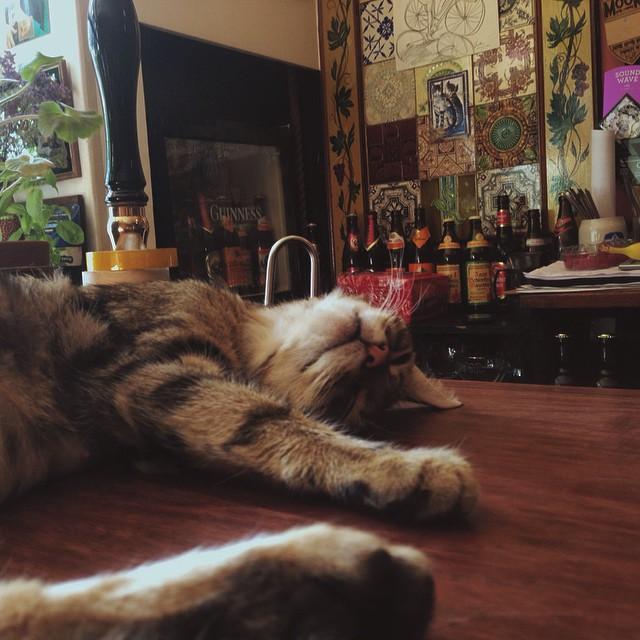 Les chats sont les rois dans ce pub en Angleterre bar-a-chat-8