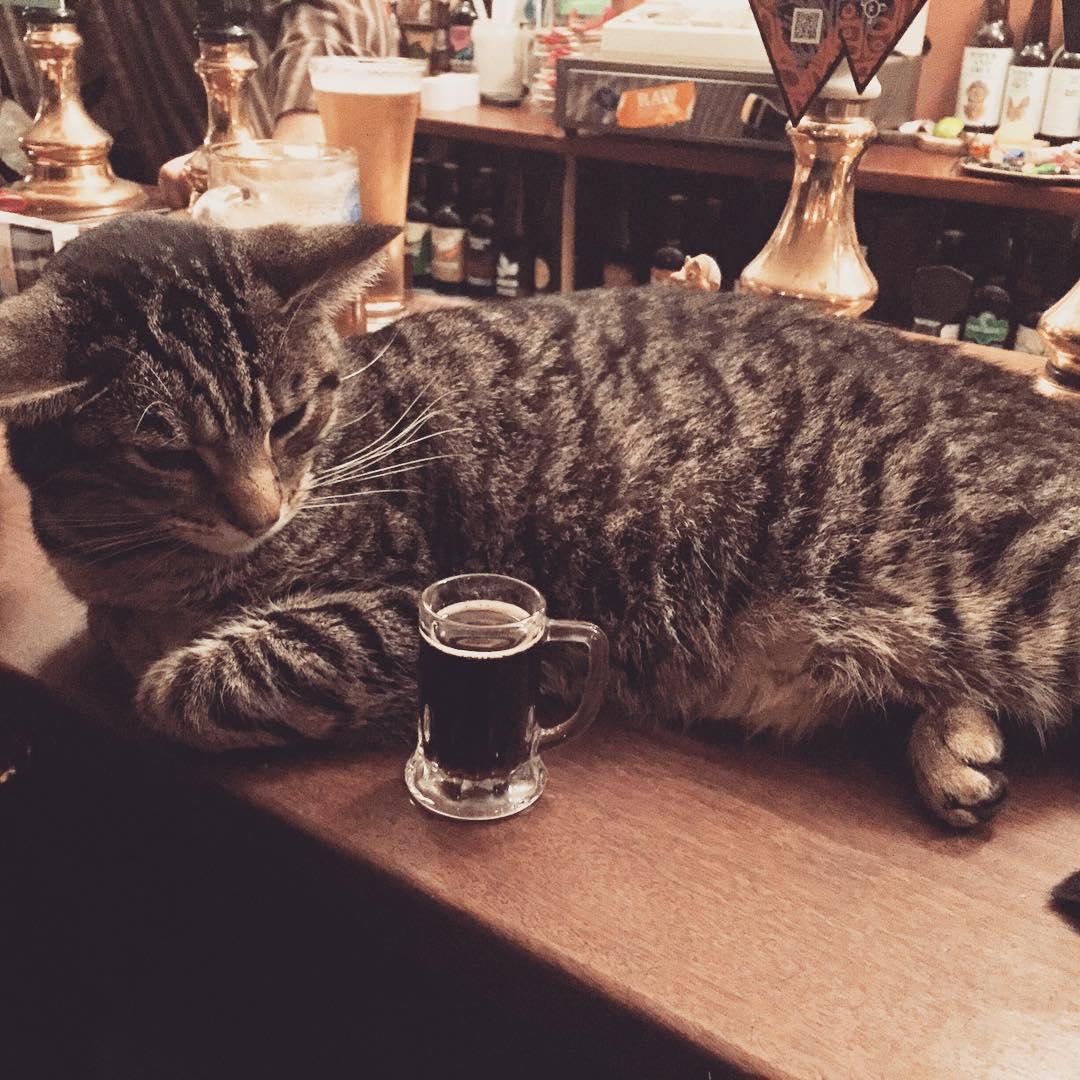 Les chats sont les rois dans ce pub en Angleterre bar-a-chat-9