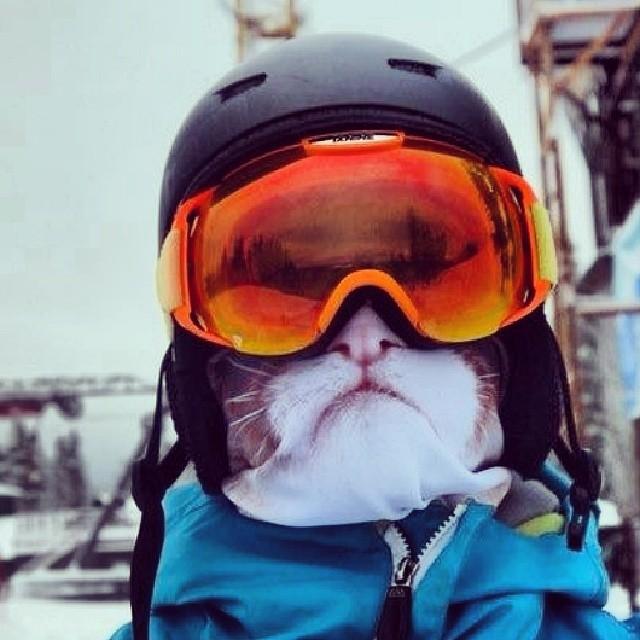 Transformez-vous en félin avec ces cagoules de ski originales cagoule-animaux-ski-4