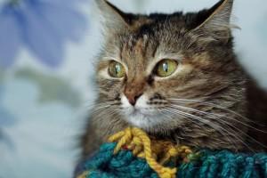 Pourquoi votre chat se frotte t-il partout ? cat-1005489_960_720-300x200