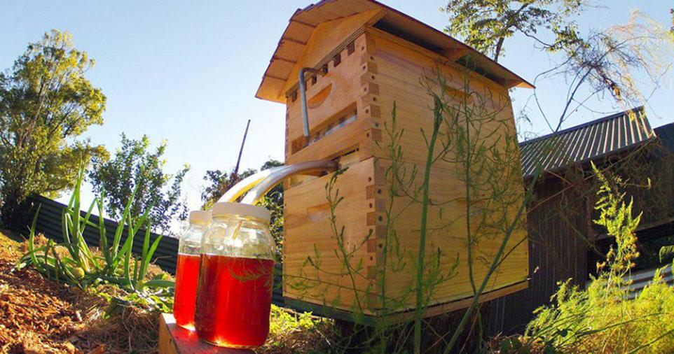 Le miel et les abeilles flow-hive-ruche-robinet