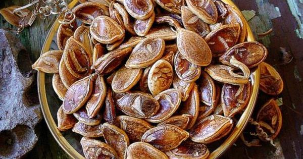 Des graines vieilles de 850 ans ont donné ces énormes courges graine-legume-800-ans-2