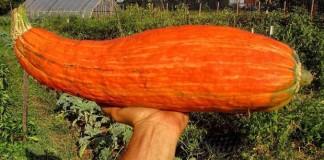 Chaki : l'actualité traitée avec bonne humeur, soyons positifs ! graine-legume-800-ans-6-324x160