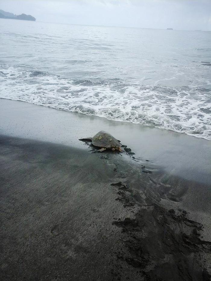 Un homme achète deux tortues sur un marché local pour les remettre à la mer homme-sauve-deux-tortues-1