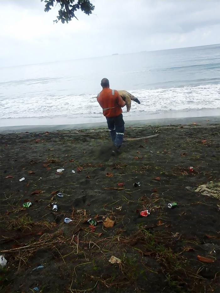 Un homme achète deux tortues sur un marché local pour les remettre à la mer homme-sauve-deux-tortues-2