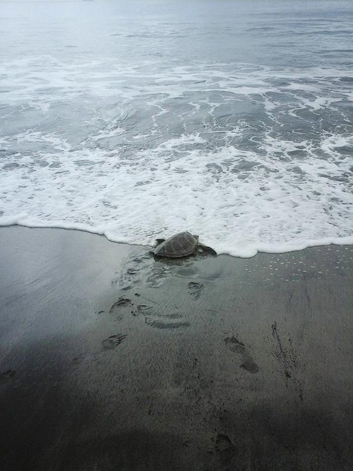 Un homme achète deux tortues sur un marché local pour les remettre à la mer homme-sauve-deux-tortues-4