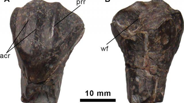 Un nouveau dinosaure découvert en Espagne ! nouveau-dinosaure