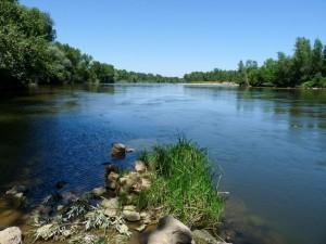 L'allier, une magnifique rivière à saumons riviere-allier-300x225