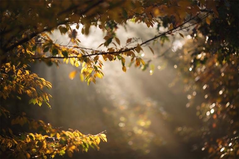 TOP 25 des plus belles photographies de Flickr 2015 top-25-plus-belles-photos-flickr-12