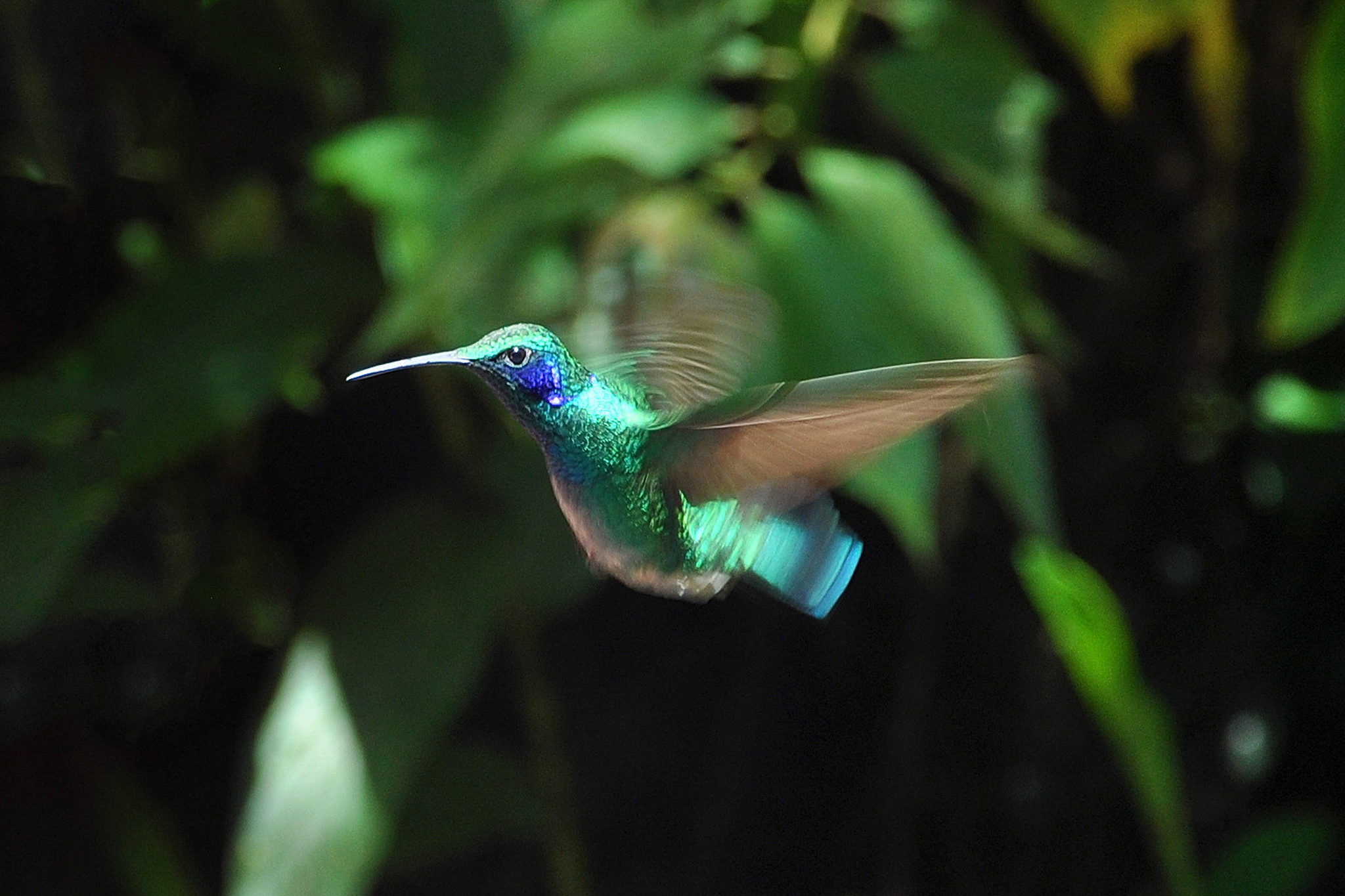 Le Costa Rica, petit pays aux innombrables merveilles voyage-costa-rica-12