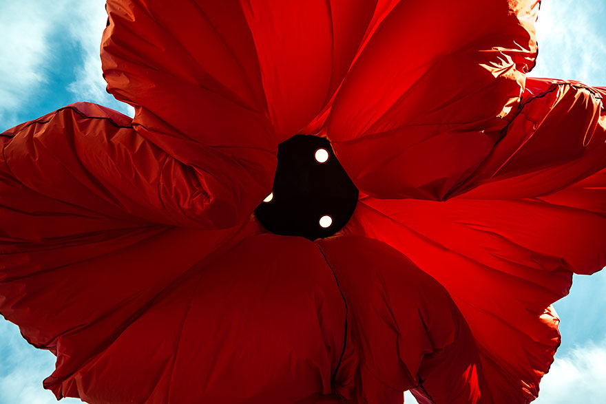 Ces grandes fleurs rouges s'allument et se gonflent dès que l'on s'arrête en-dessous fleur-auto-gonflante-jerusalem-2