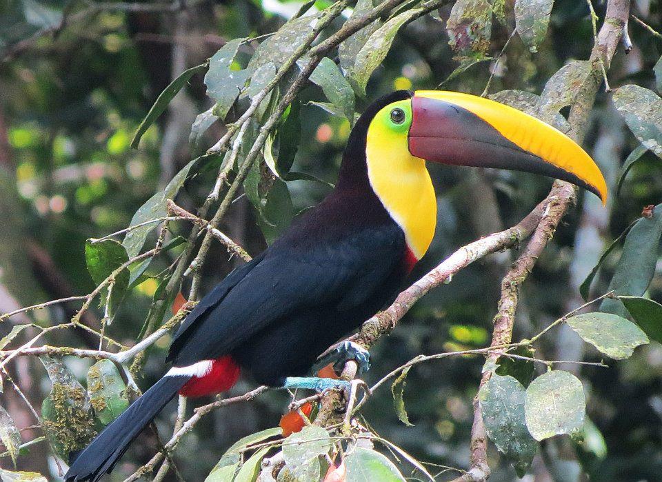 Le Costa Rica, petit pays aux innombrables merveilles voyage-costa-rica-9